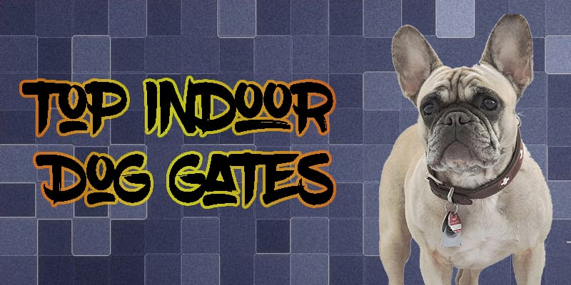 Top 5 Indoor Dog Gates On The Market