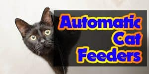 Top 6 Best Automatic Cat Feeders Reviews and a Buyers Guide