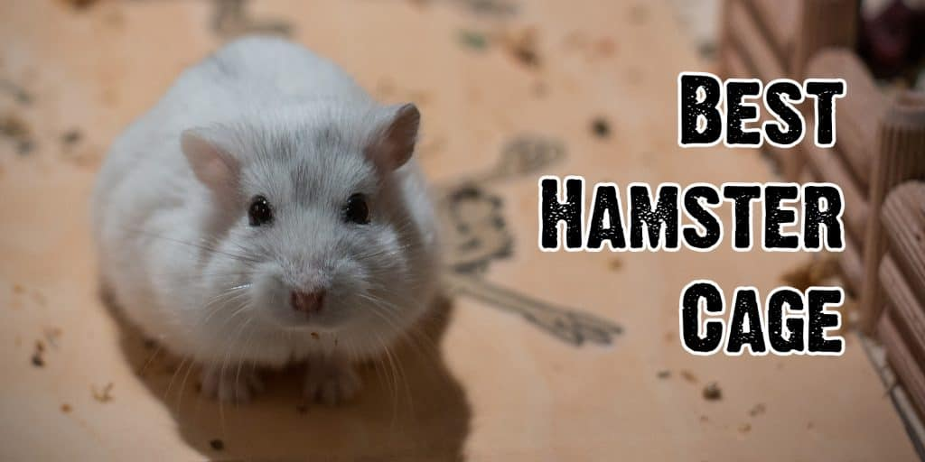 The Best Hamster Cages