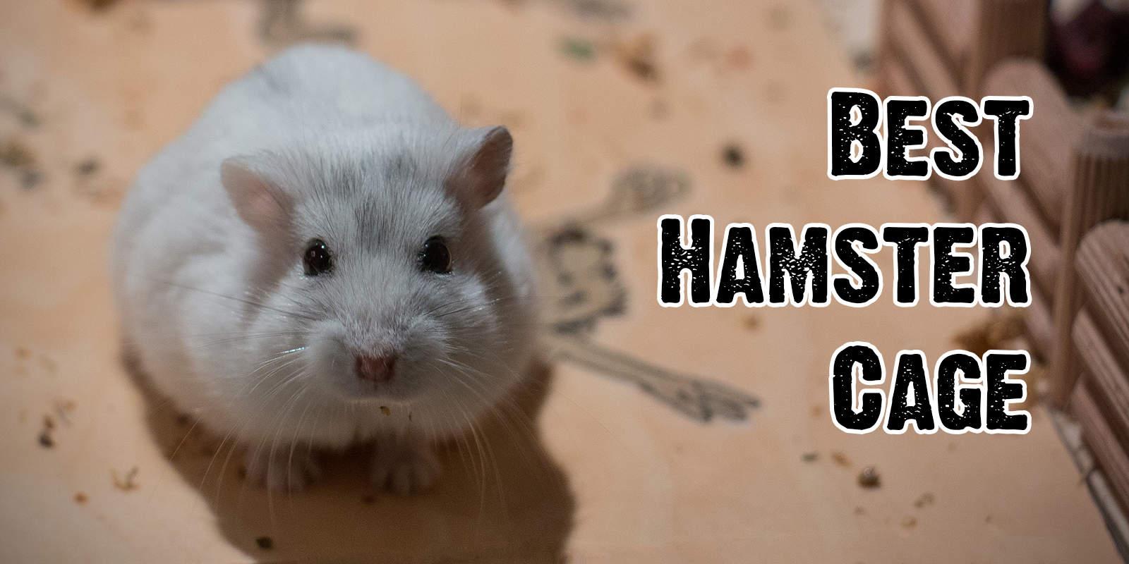 Best Hamster Cage Petandbabygates