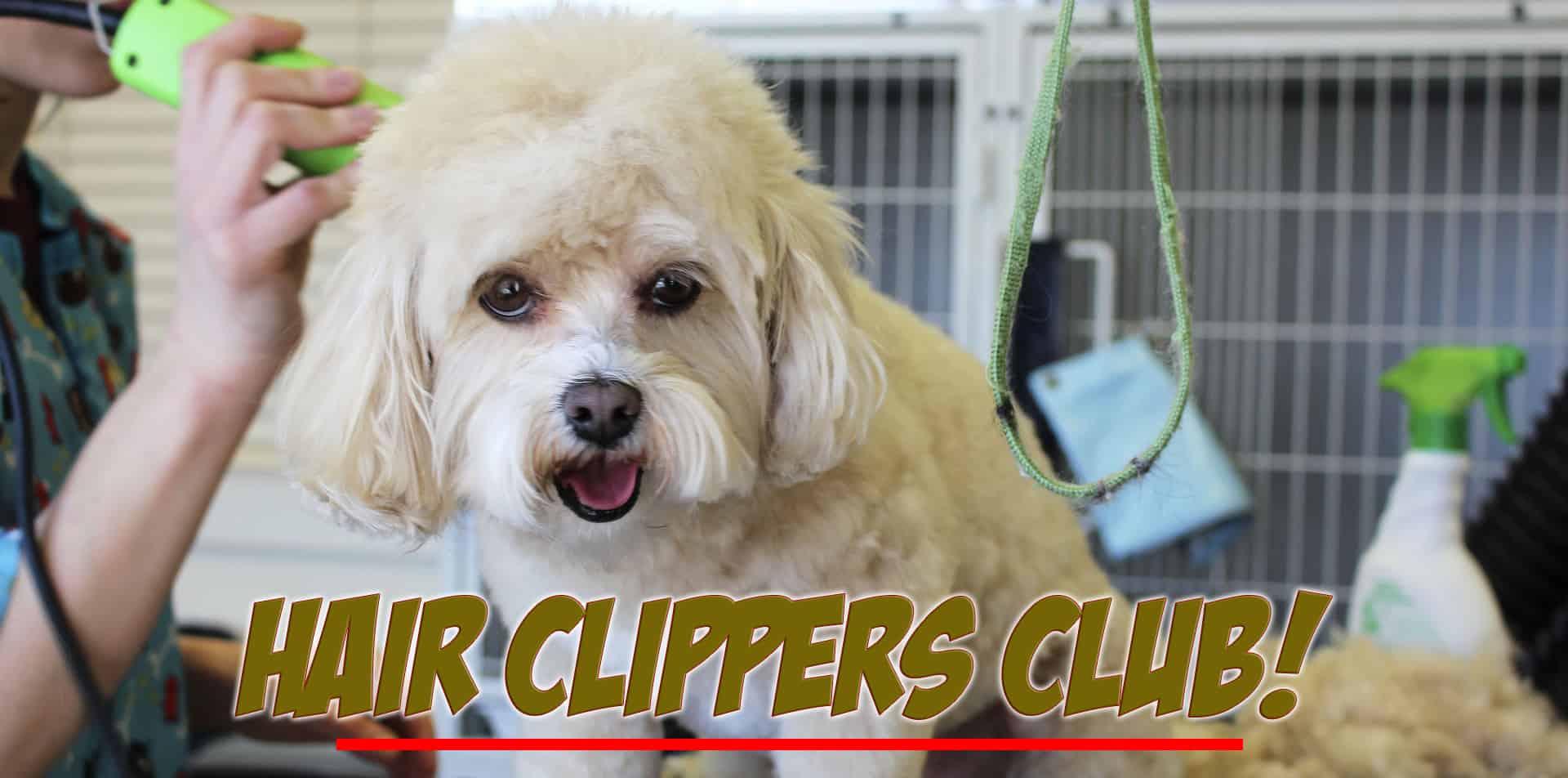 Hair Clippers Club