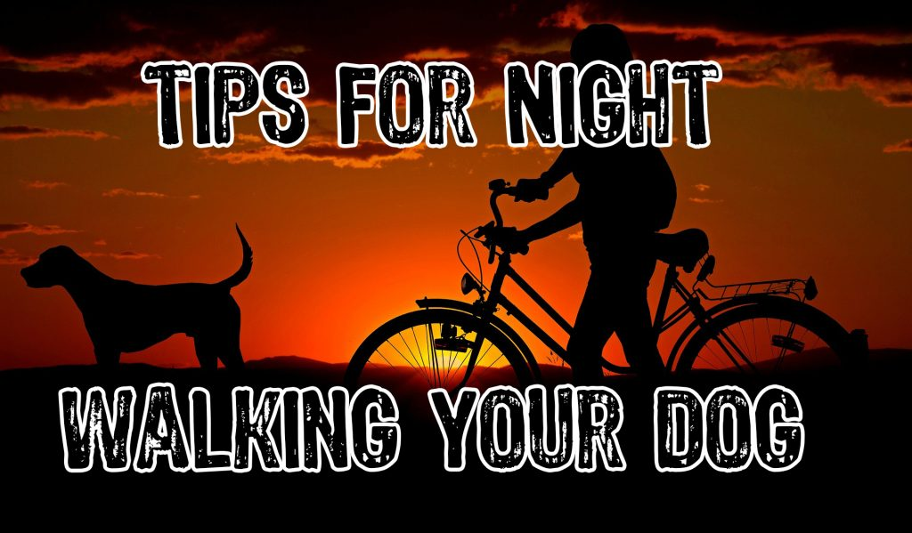 15 Smart Tips For Walking Your Dog at Night