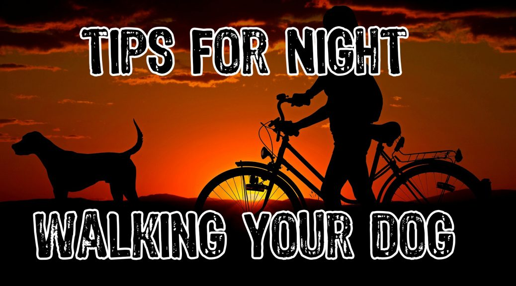 Tips For Night Walking Your Dog