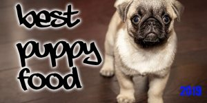Best 5 Dog Food For Puppies