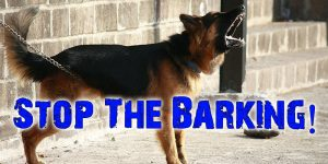 5 Ways To Get Your Dog To Stop Barking At Strangers